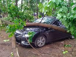 Апеляція: Відшкодування збитків завданих падінням дерева на автомобіль
