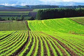 Використання земельної ділянки сільськогосподарського призначення